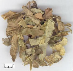 chinese medicine herbs for fertility